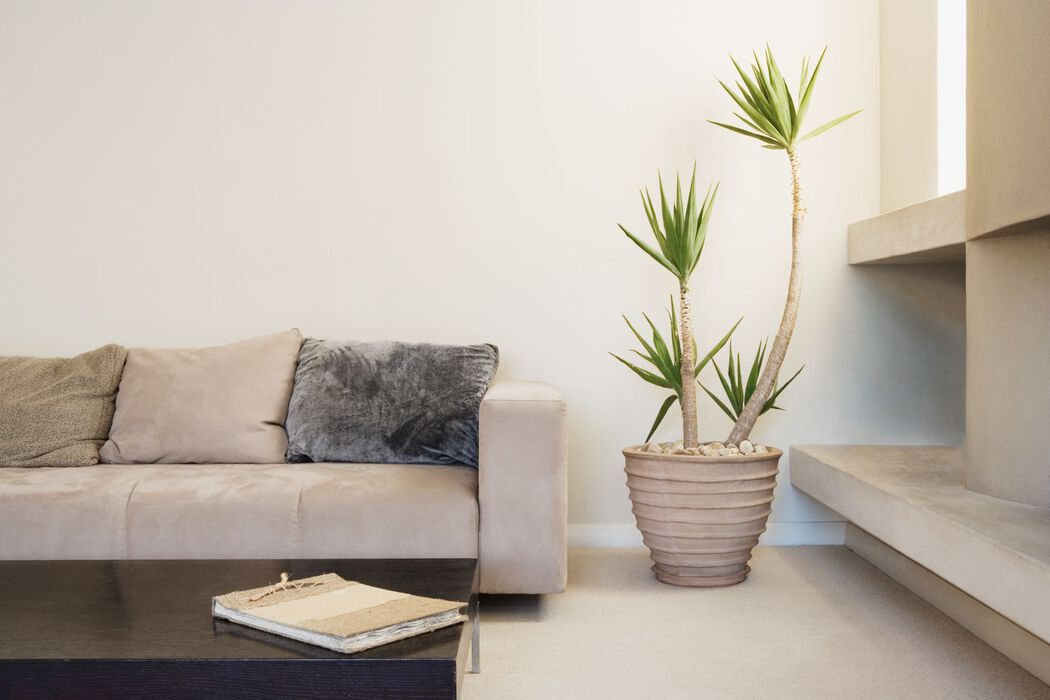 Modern living room with potted plant
