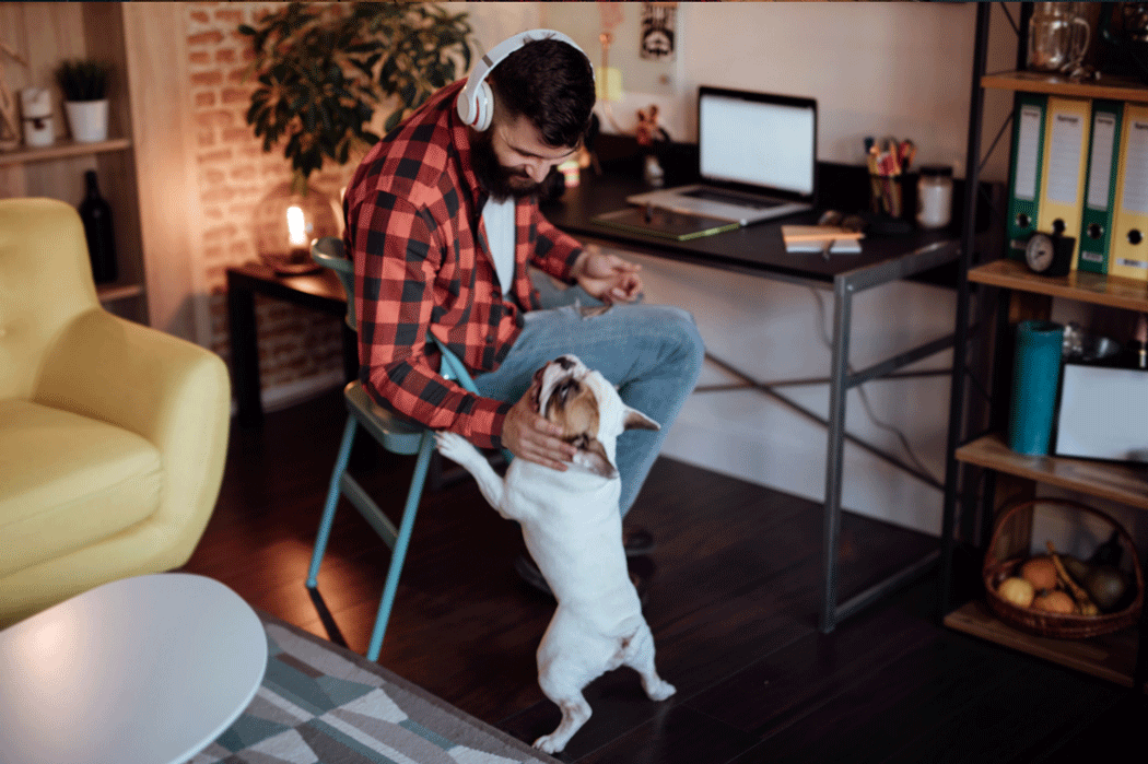 Man at work at a small desk in a living room, leaning over to pet an eager-looking dog.